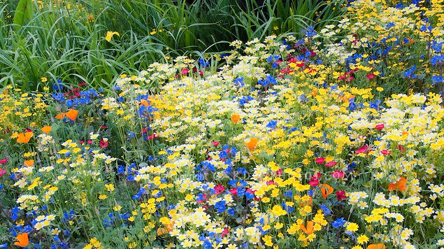 colorful-mixed-flower-garden-31460.jpg