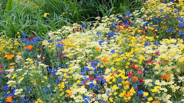 colorful-mixed-flower-garden-31460.jpg
